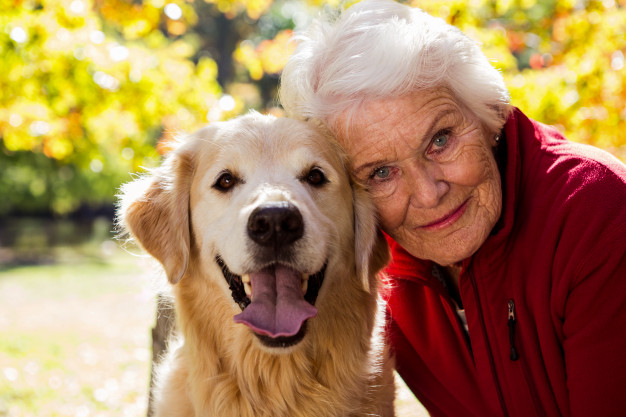 What kind of dog is suitable for the elderly